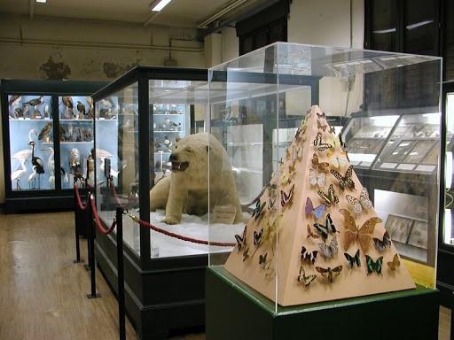 Naturgeschichtliches Museum