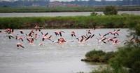 Pink flamingos