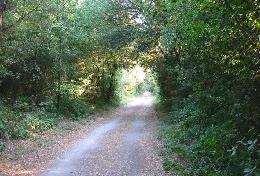 Pinewood of Po di Volano - Natural Reserve of Volano