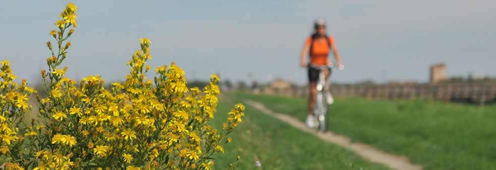 Enjoy a bike ride in Spring