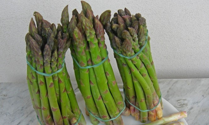 The green asparagus of Altedo - IGP