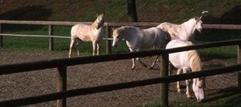 """Centro de equitacion y entrenamiento """"Spiaggia Romea"""""""