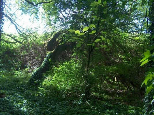 Bosque de Porporana