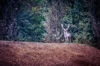 La Reserva Natural del Gran Bosco della Mesola, con una superficie de 1.058 hectáreas, representa uno de los bosques de llanura mejor conservados.