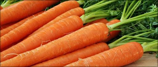 La zanahoria del Delta ferrarés