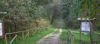 Bosque de la Panfilia