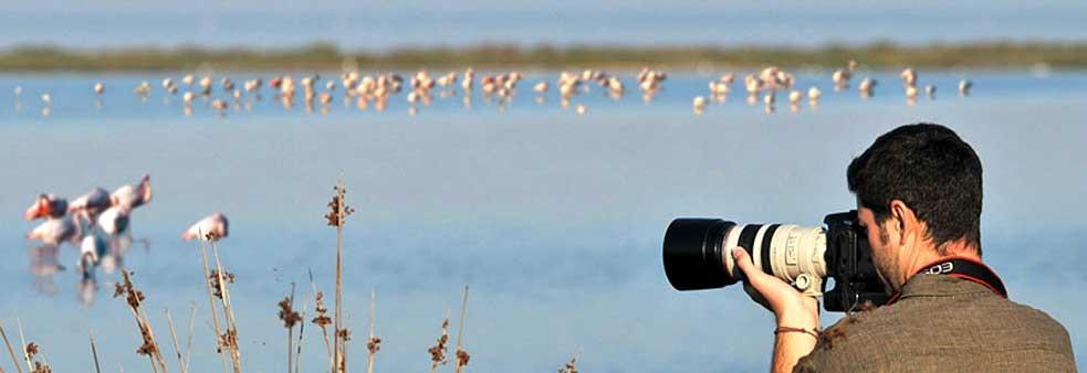 Birdwatching dans le Delta du Pô