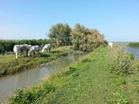 Boscoforte - Chevaux blancs