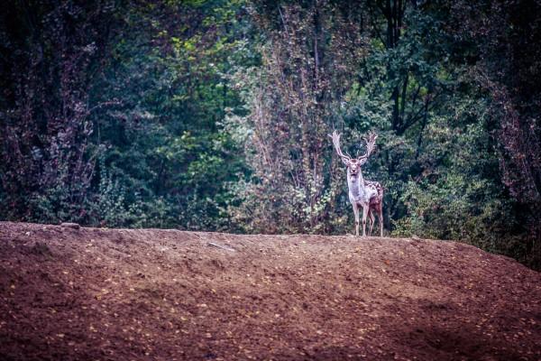 Bois de la Mesola - Parc du Delta du Pô