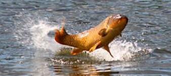 Circolo Lago Gattola