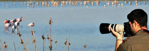 Birdwatching nel Delta del Po