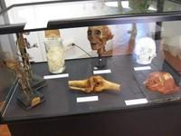 Museo Giovanni Tumiati