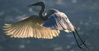 Una delle zone umide più importanti d'Europa, la più vasta d'Italia che accoglie elementi di biodivesità che lo rendono un paradiso per naturalisti, biologi, scienziati turisti e birdwatchers.