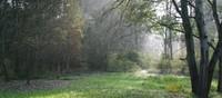 Una passeggiata nell'Oasi Bosco della Panfilia